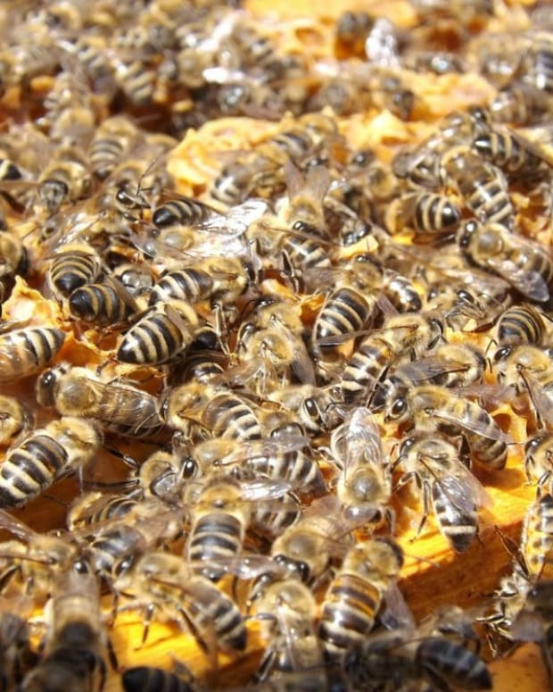 Mom Who Posed With 20,000 Bees Suffers Stillbirth (Photos) Promo Image