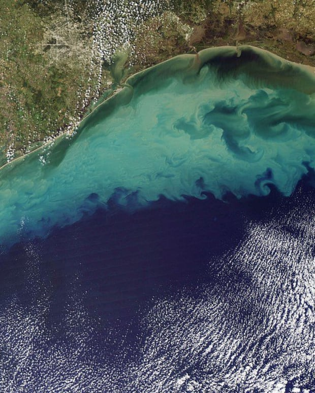 'Dead Zone' In Gulf Of Mexico Is The Largest Ever Promo Image