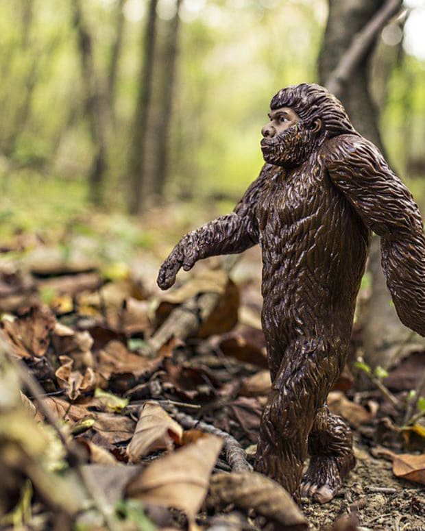 California Farmer Spots Bigfoot Family (Photos) Promo Image