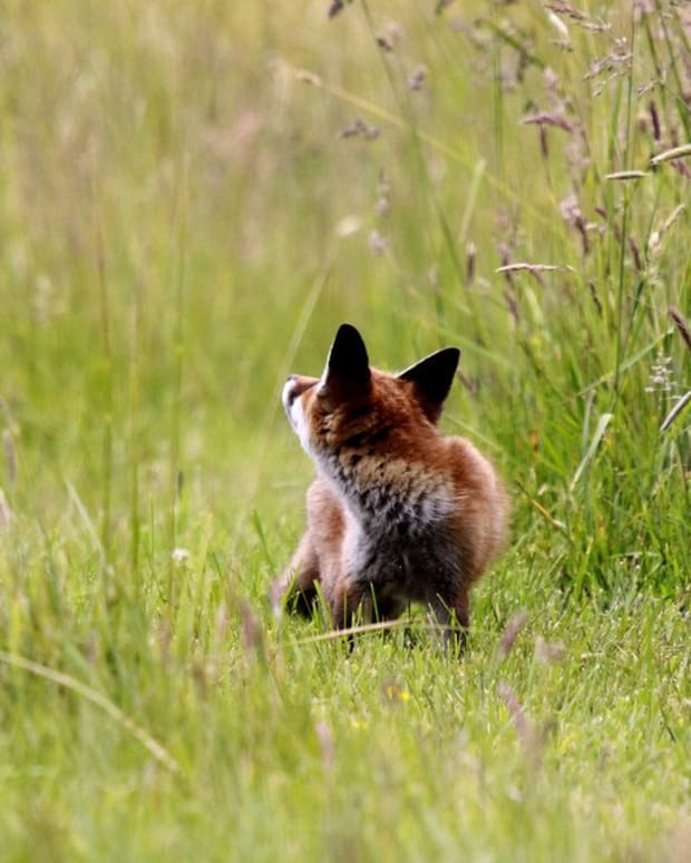 Man Rescues Fox Cubs From Trash (Photos) Promo Image