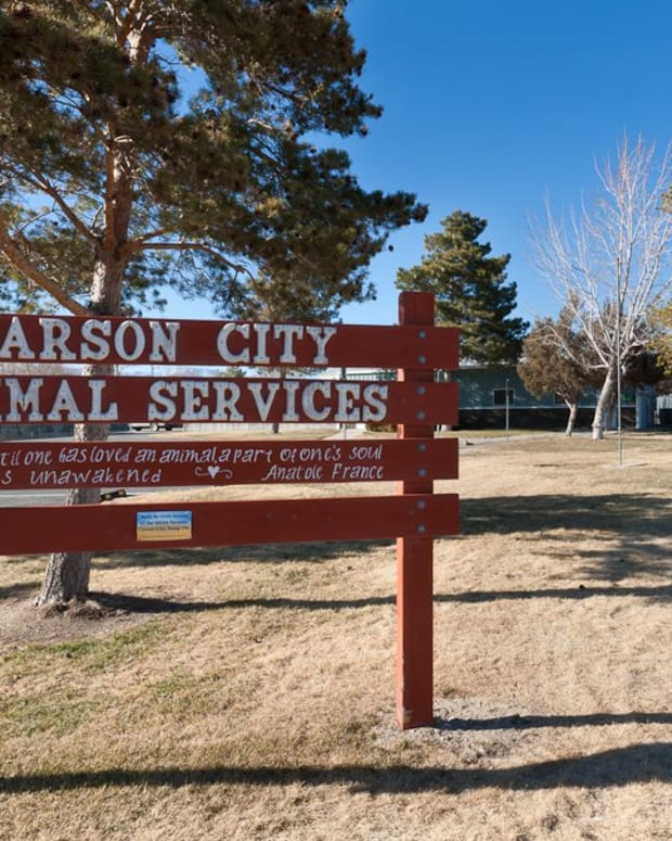 Carson City Animal Services