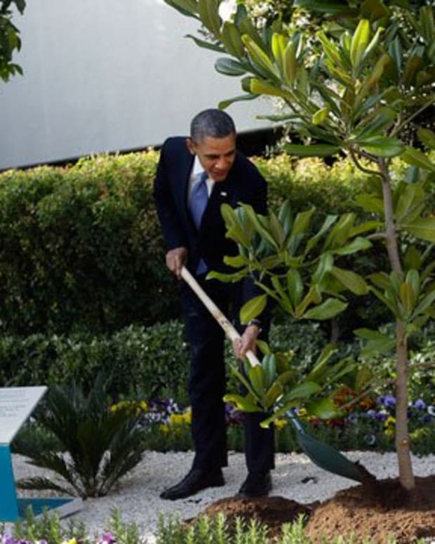Obama's tree might be uprooted after testing.