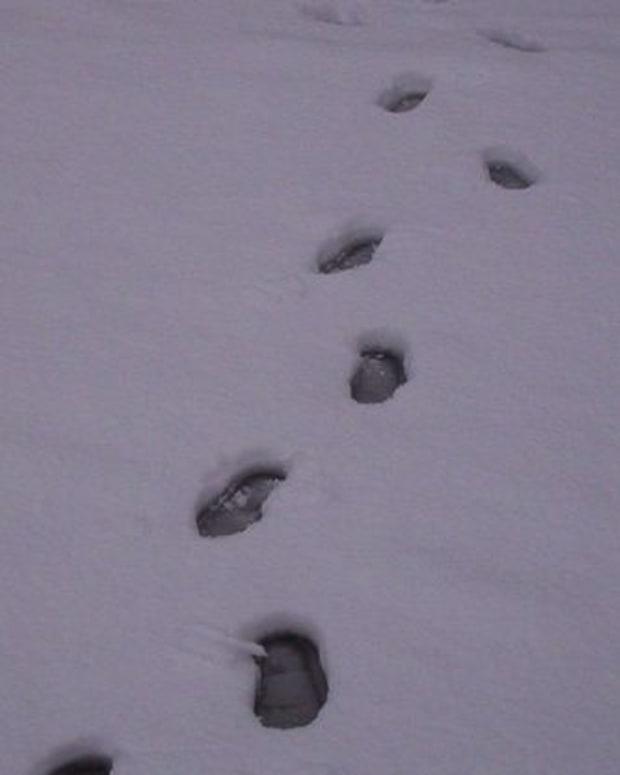 footprint_featured.jpg