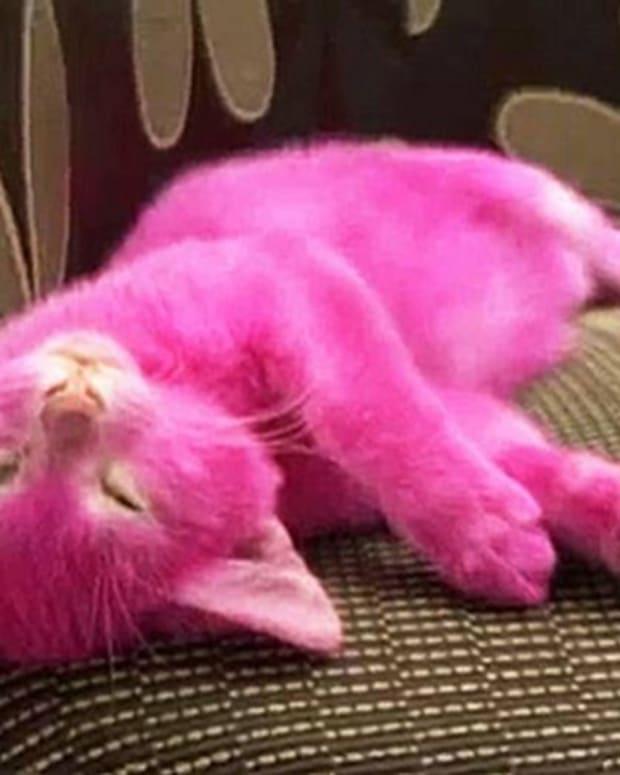 Pink Kitten.