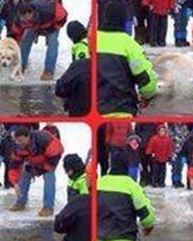 dog_featured.jpg