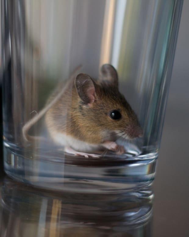 mice1_featured.jpg