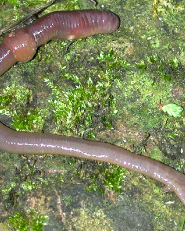 earthworm_featured.jpg