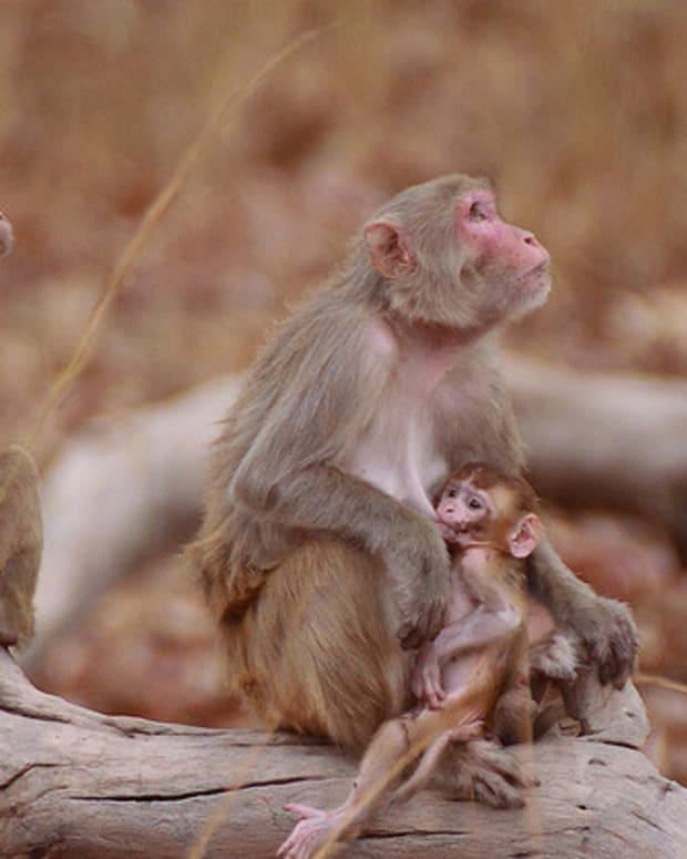 monkey_featured.jpg