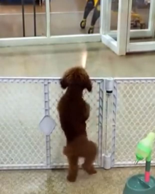 dancingdog_featured.jpg