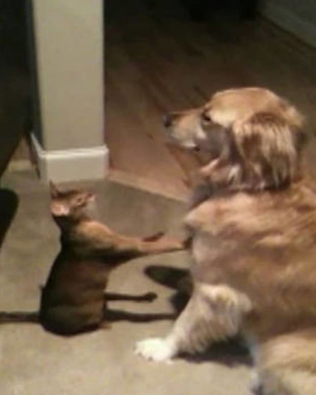 catanddog1_featured.jpg