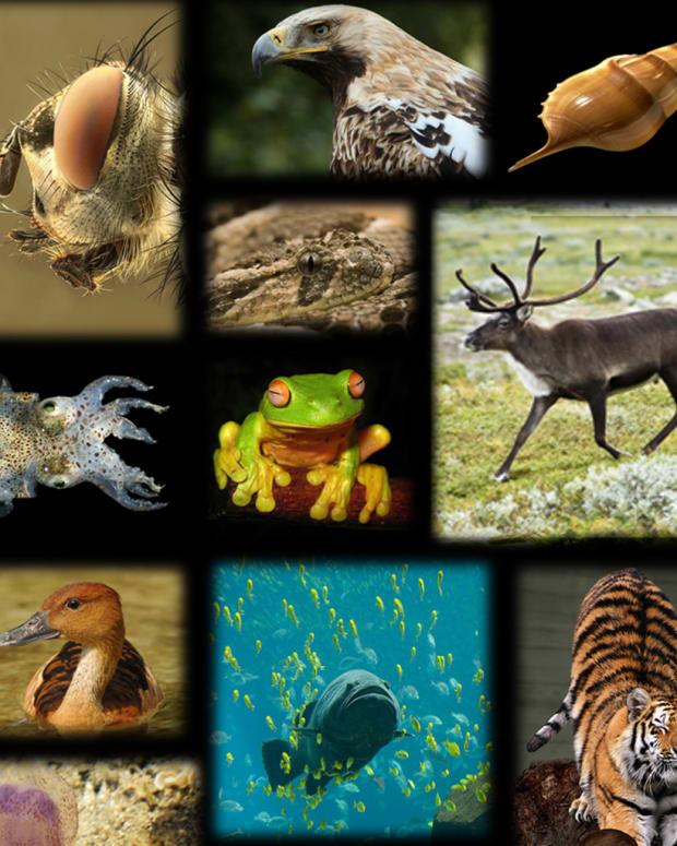 20170524_NewSpecies_THUMB_SITE.jpg
