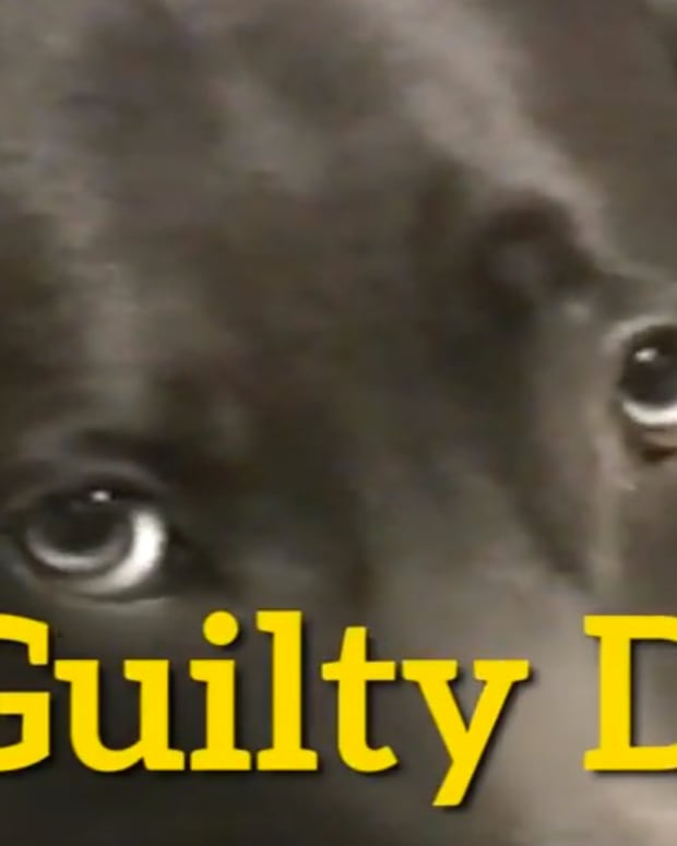 guiltydogs.jpg