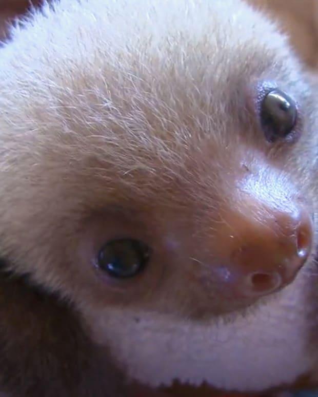 20160511_Sloths_Thumb.jpg
