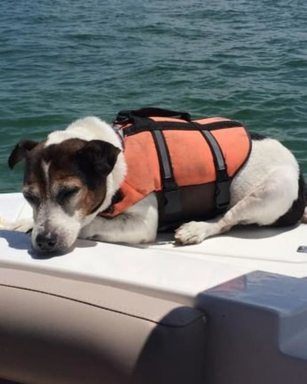 Birthday Boating Trip Turns Into Dog Rescue Mission Promo Image