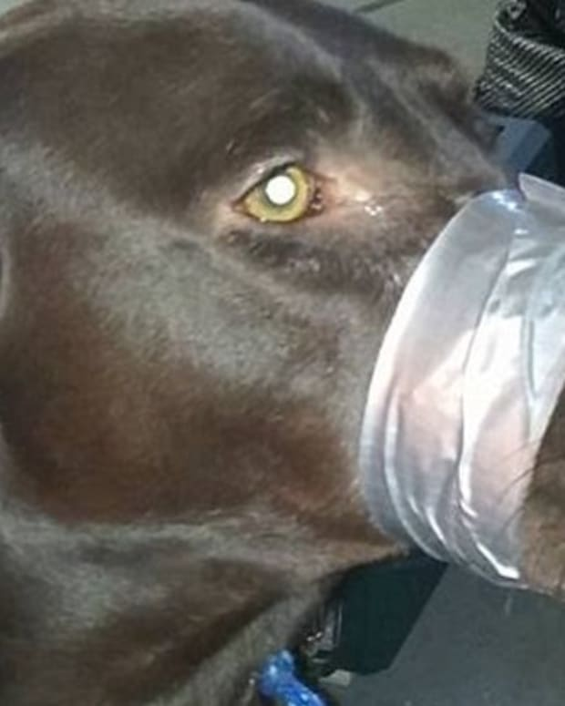 dog with its mouth duct-taped