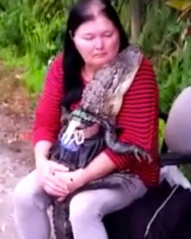 Florida Woman Fights To Keep Her Pet Alligator (Video) Promo Image