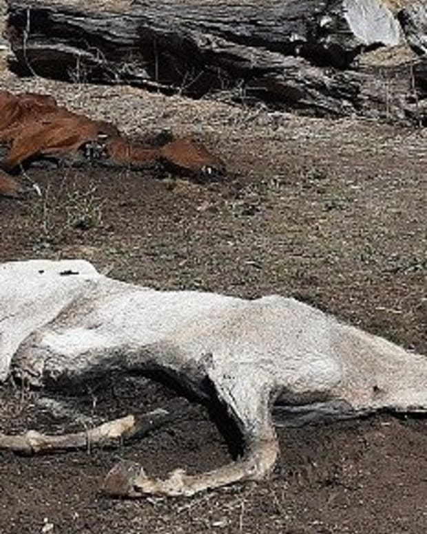 40 Dead And Dying Horses Found On Australian Estate Promo Image