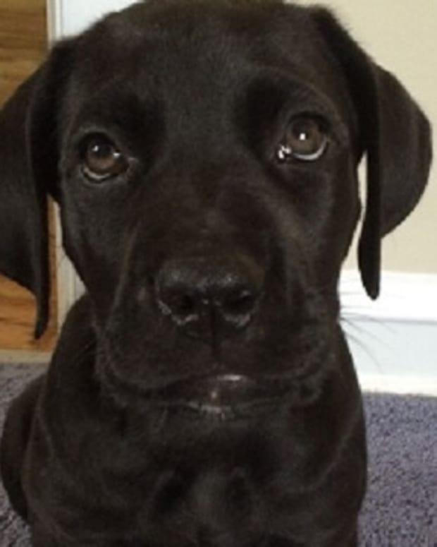 Jasper The Puppy