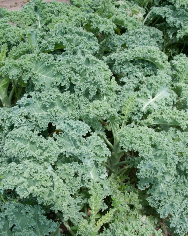 Listeria Found In Dole Salad Facility Promo Image
