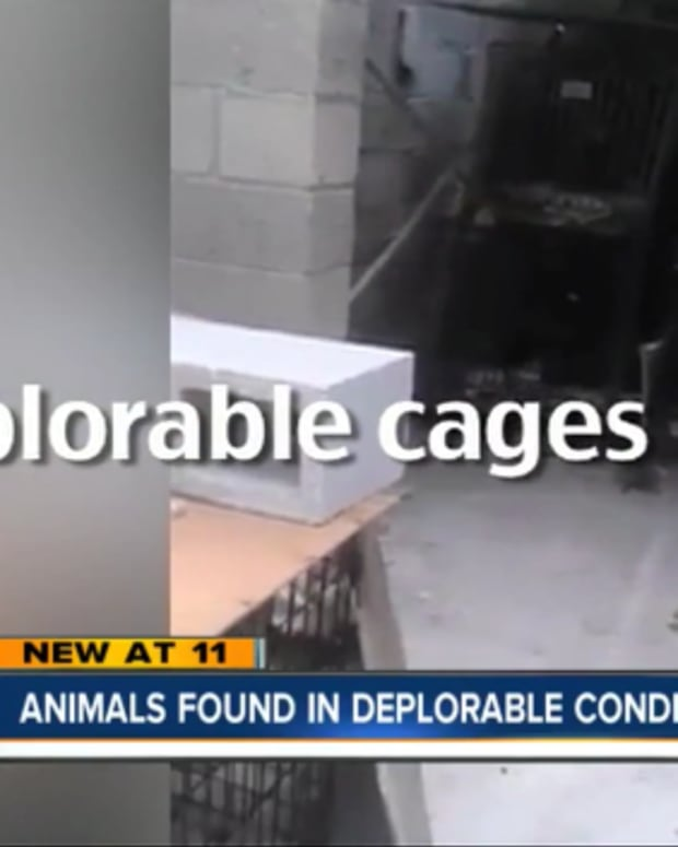 cages.jpeg