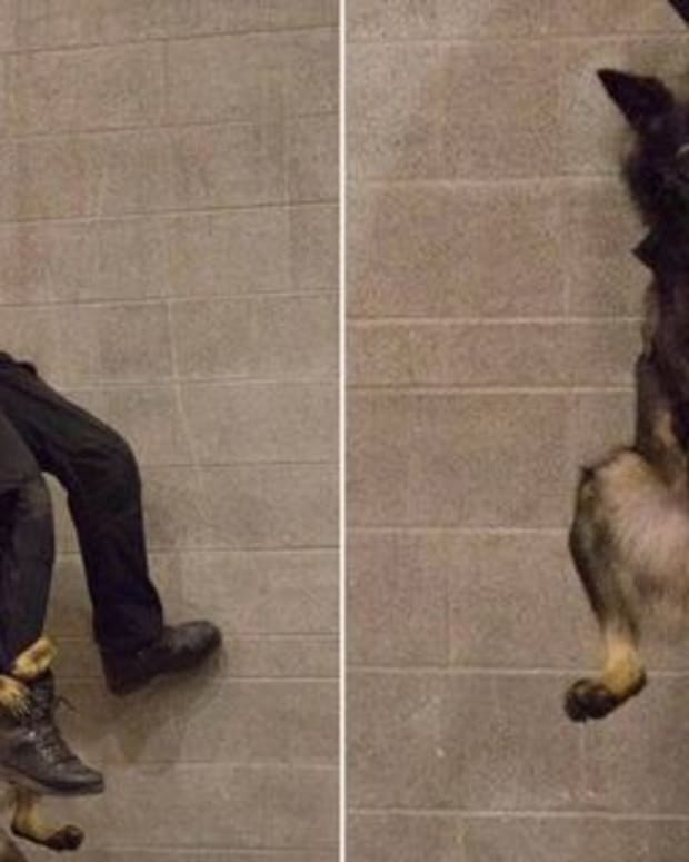 Vancouver PD officer and K-9 Officer Niko