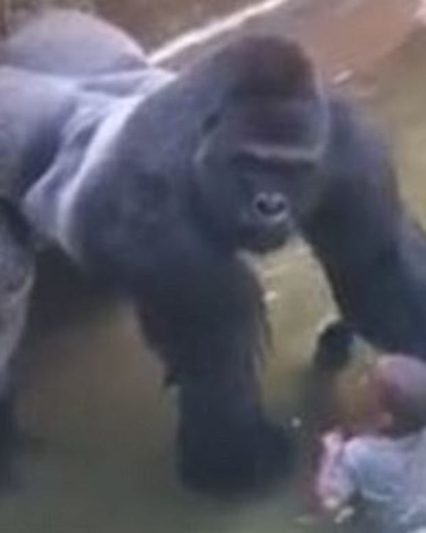 Witness Defends Mom Of Boy Who Fell Into Gorilla Exhibit Promo Image