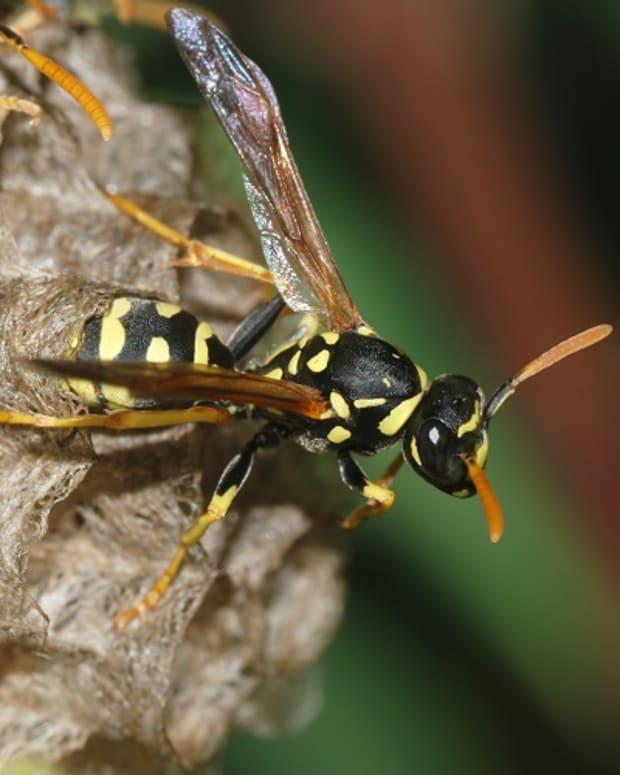 wasp.jpeg