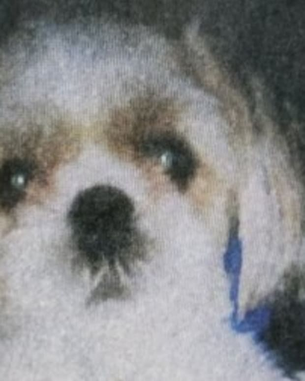 Woman Sentenced For Killing Her Neighbor's Dog Promo Image