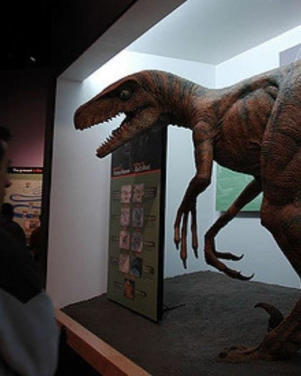 Atheist Group Wants Creation Museum Field Trips Nixed Promo Image