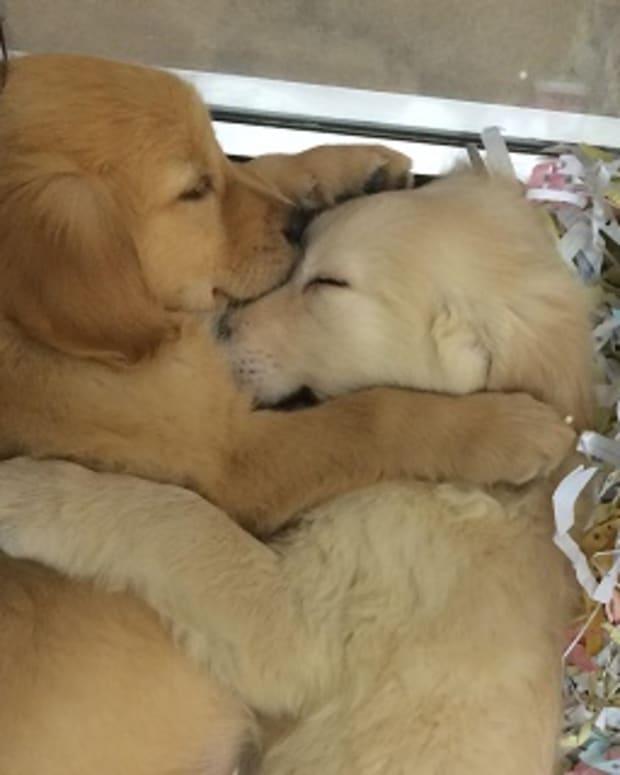 cuddles.jpeg