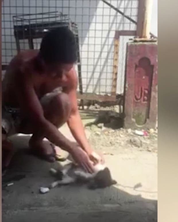 dog being brought back to life by man