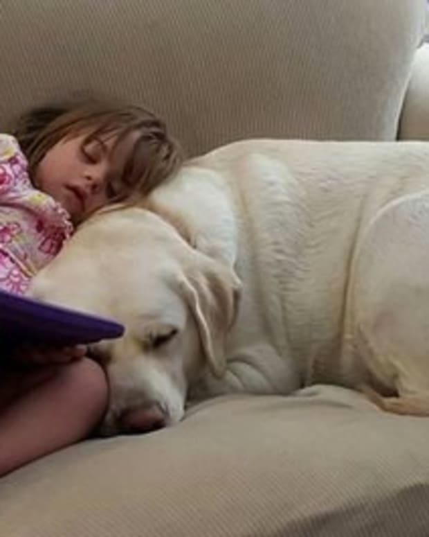 Alert Dog Detects Blood Sugar Drop 5 Miles Away (Photos) Promo Image