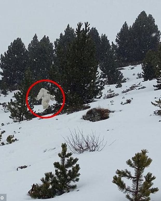 Possible Yeti sighting in Spain