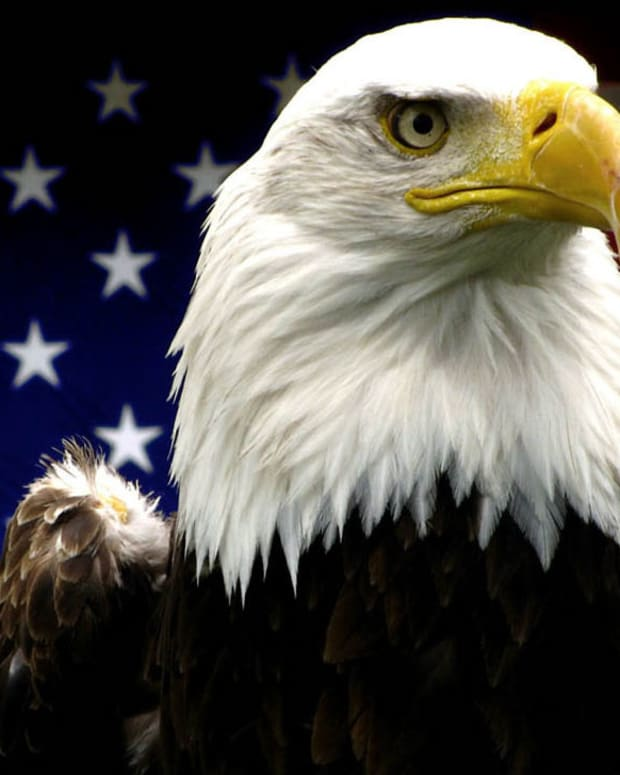 Army Veteran Saves America's National Bird (Video) Promo Image