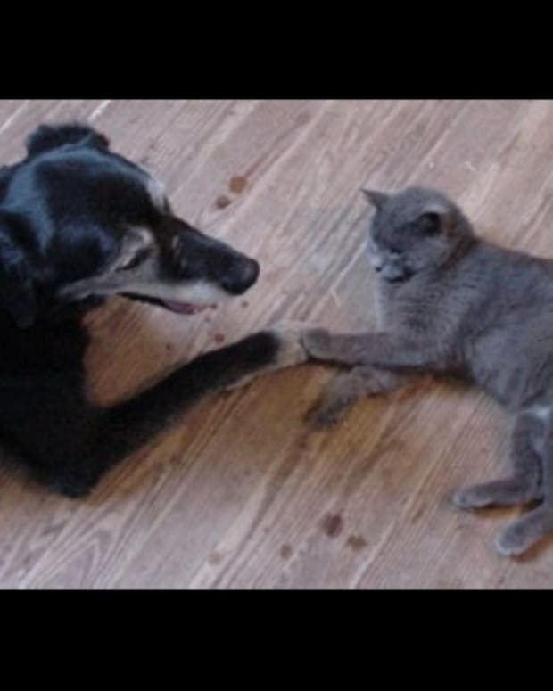 Dog and Cat Hold Paws