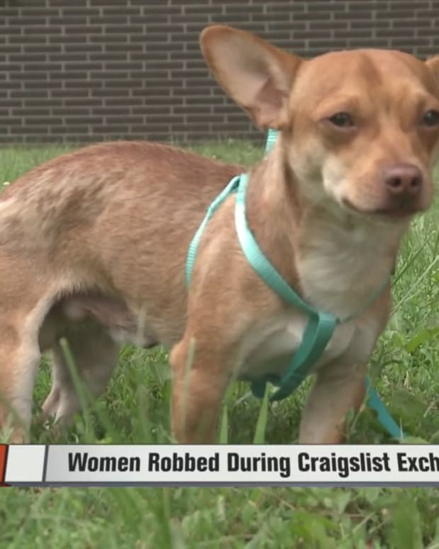 craigsdog.jpg