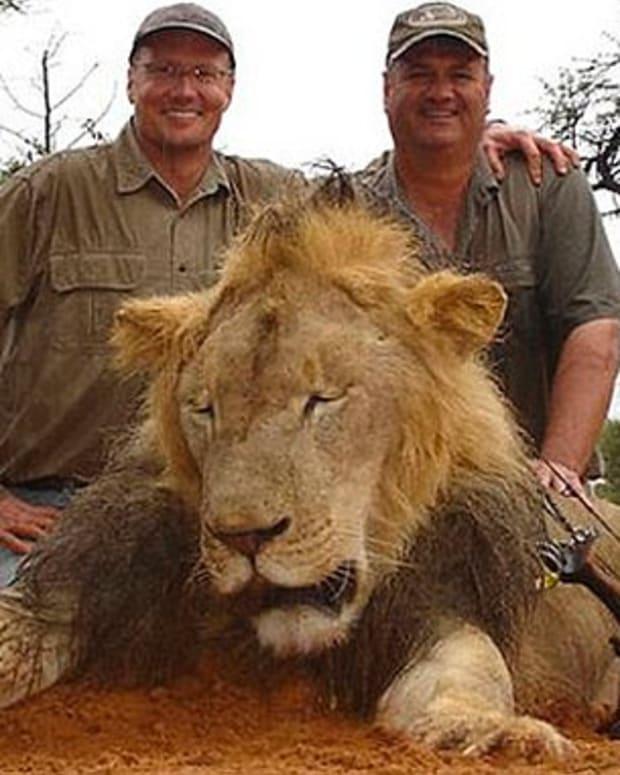 lionpic.jpg