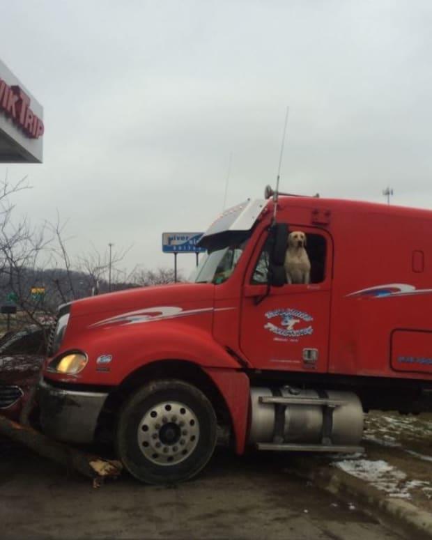 Minnesota Dog Drives Semi Truck Into Tree (Video) Promo Image