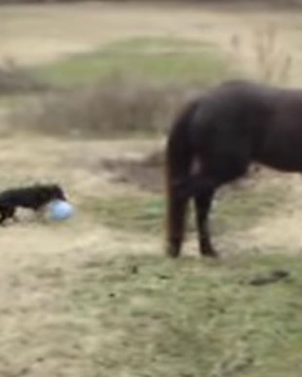 Horse And Dog's Unlikely Friendship Goes Viral (Video) Promo Image