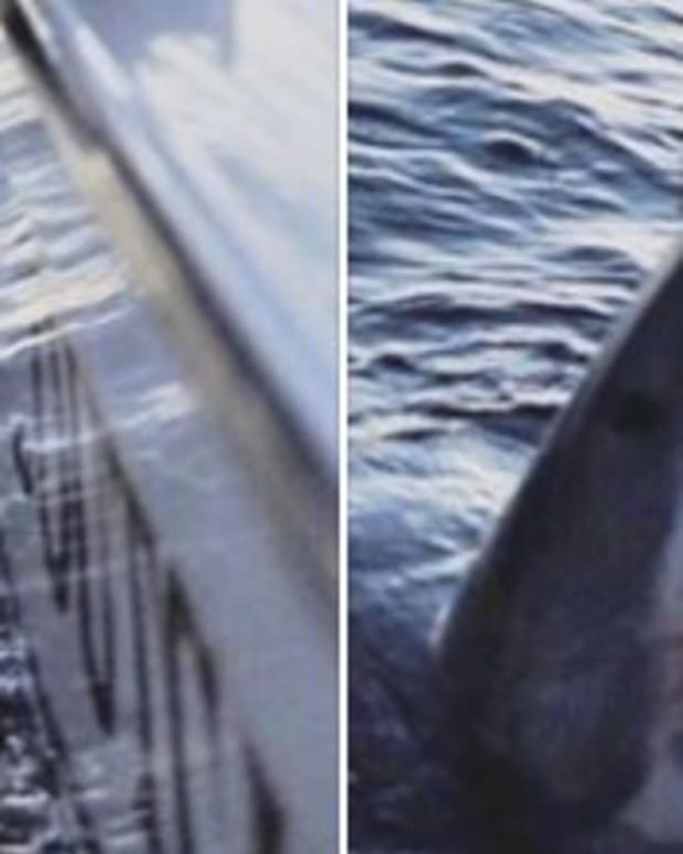 Giant Great White Shark Caught Off S.C. Coast (Photos) Promo Image