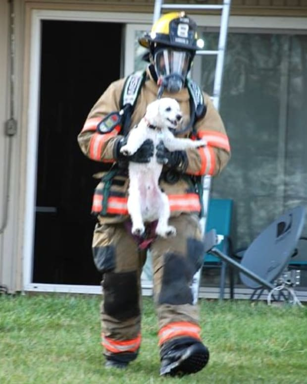 Puppy Smiles While Being Rescued By Firefighter Promo Image
