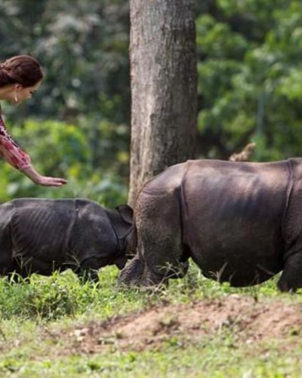 Poachers Kill Second Rhino In A Week In National Park Promo Image