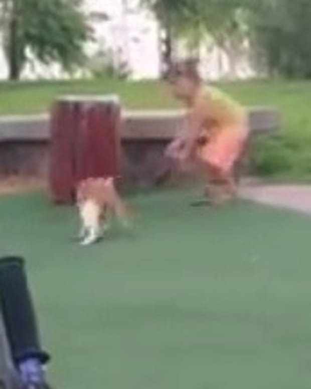 Instant Karma For Girl Who Stomped Cat's Tail (Video) Promo Image