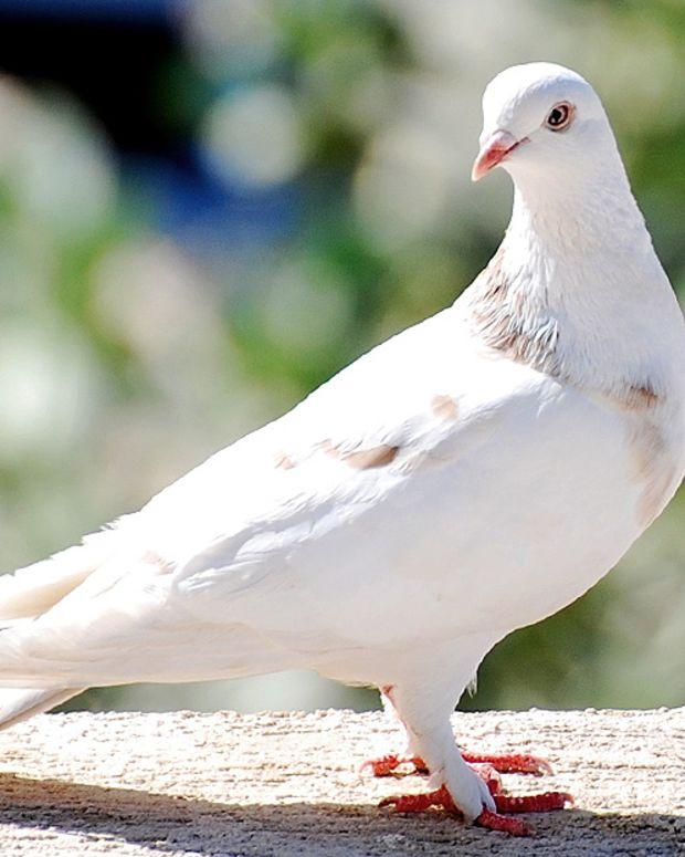 whitebird_featured.jpg