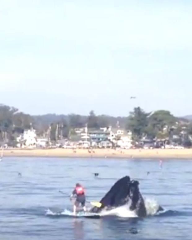 Paddle Boarder Humpback Whale