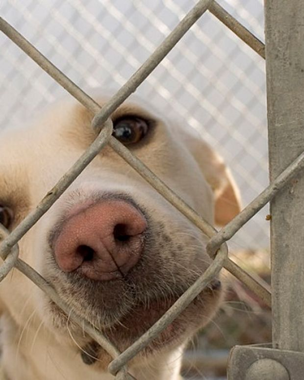 Dog recuperating in an animal shelter