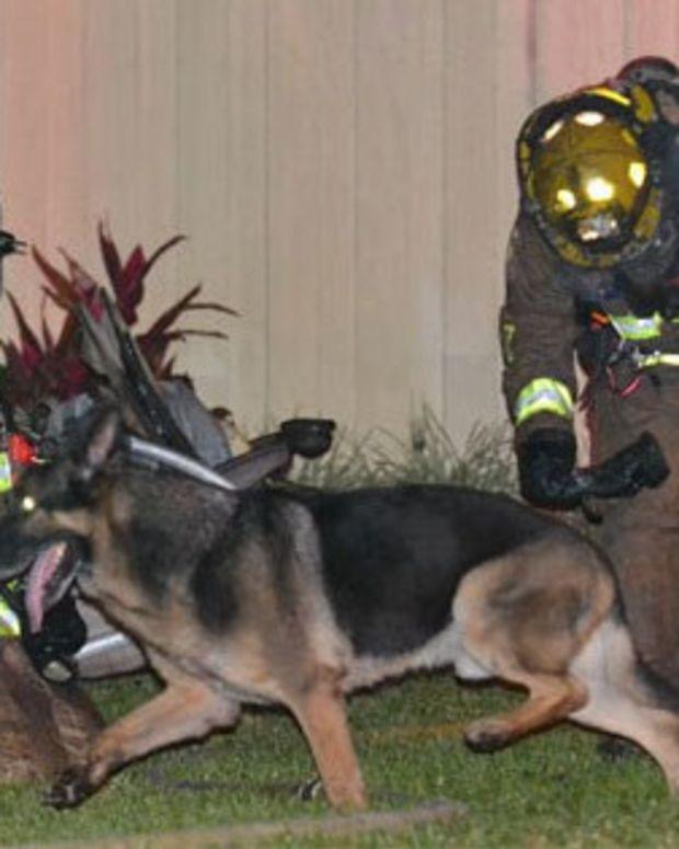 German Shepherd Helps Save Children From Burning Home Promo Image