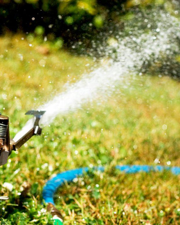 Sprinkler and lawn