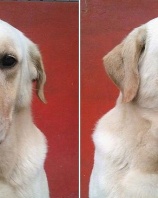 Dog Dies After Rescuing Seven People From Earthquake Promo Image