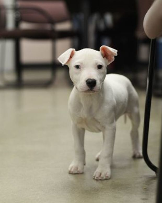 willa, a dog seized by authorities